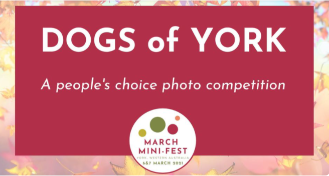 March Mini Fest - Dogs of York Winners Presentation
