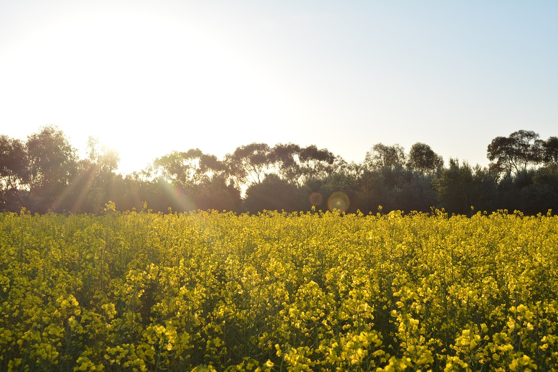 Canola strategy promotes safety and respect